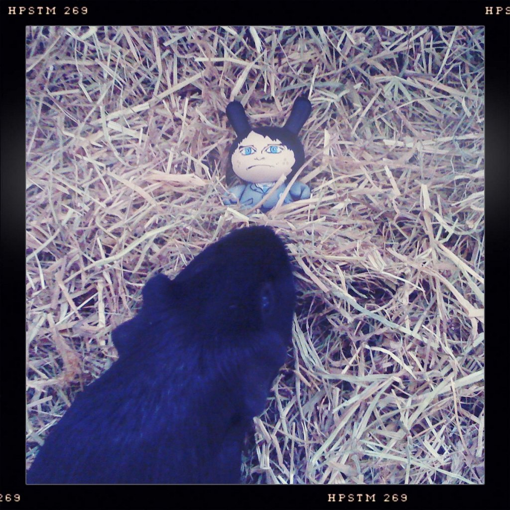 Senor-Panchito-and-Luna-getting-freaky-in-the-hay.JPG